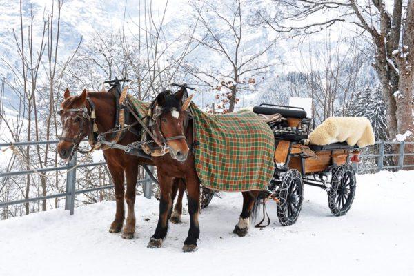 Pferdeschlittenfahrten im snow space Flachau - Winter- & Skiurlaub im Ski amadé
